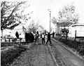 Shady Lane in Petersville - Circa '60s.jpg
